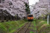 Ashino Park