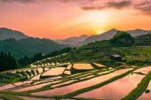 Maruyama's Thousand Rice Terraces