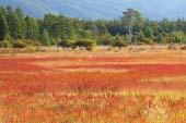 Odashiro field