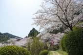 Kotohira Shrine