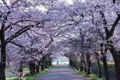 Công viên Muramatsu