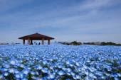 Uminonaka-michi Seaside Park