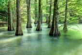 Sasaguri Kyudai Forest