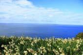 အဲခ်ိဇန္းပင္လယ္ကမ္းနား