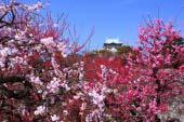 Công viên Thành Osaka