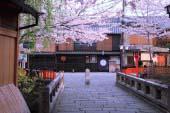 祗园白川的樱花