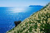Công viên hoa thủy tiên Nada Kuroiwa