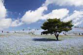 国营日立海滨公园