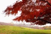 Công viên rừng Negishi