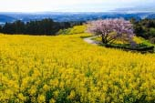 Shirakimine Plateau