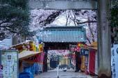 Ueno Toshogu Shrine