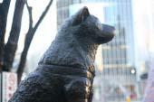 Statue of Hachiko, the Faithful Dog