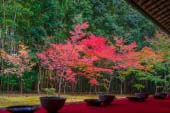 Koto-in Red Leaves of Autumn
