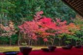 高桐院红叶