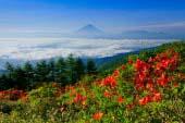 Núi Amari
