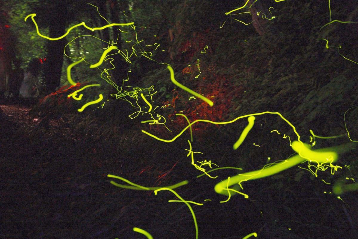天之川萤火虫节